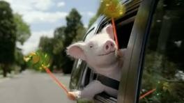 The Geico pig, Max: Laughing, Gift, Geico Commercial, Max I, Funny, Humor, Geico Pigs, Max Lov, Animal
