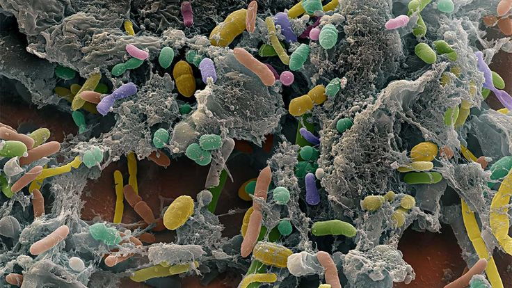 Your gut bacteria are more than what you eat