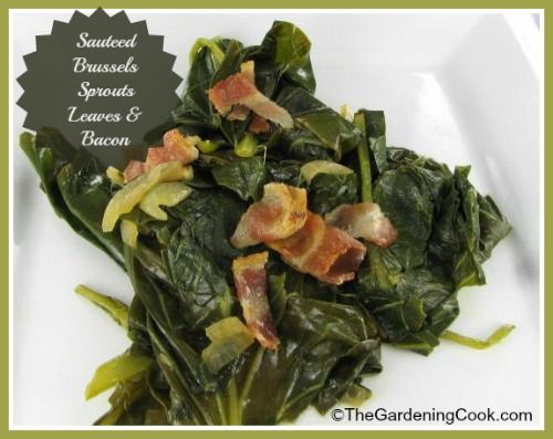 Nice alternative to steamed kale or collard greens. Brussels sprouts leaves can be steamed too and are delicious.  Get the recipe:  http://thegardeningcook.com/sauteed-brussel-sprout-leaves/