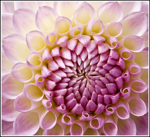 Beauty of Fibonacci