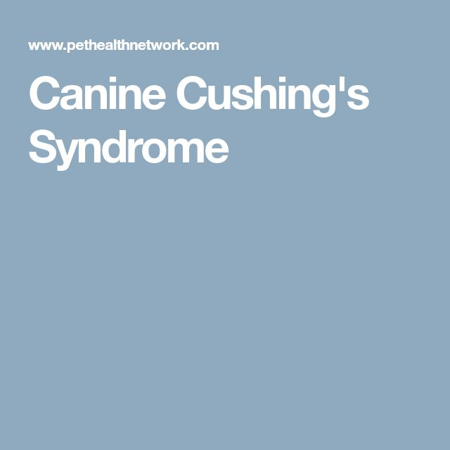 Canine Cushing's Syndrome