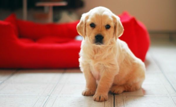 Pet Care Tips Specifically For Dog Owners |