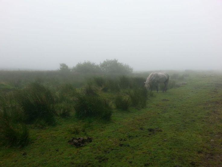 Dartmoor ... počasí je autentické: mlha, vítr, déšť (chybí už jen tma ...pokud myslíme na film Pes baskervillský