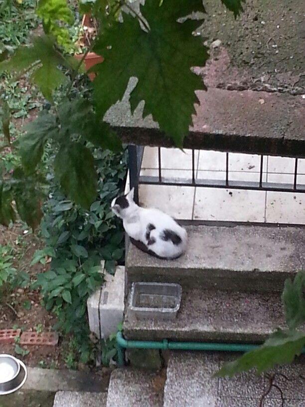 Kediciğin üstündeki surpriz kedicik :)