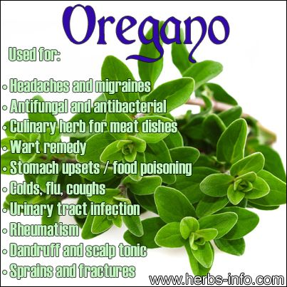 ❤ Herb Of The Day: Oregano ❤