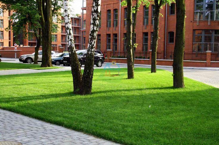Kolejna z naszych realizacji! Piękny zielony trawniczek niczym dywan!