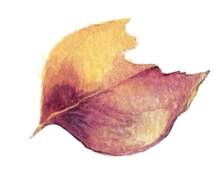 one dead leaf