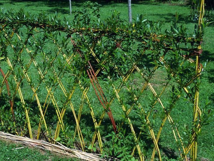 17 best id es propos de treillis de jardin sur pinterest treillis plates bandes sur lev es - Amenagement petit jardin bambou calais ...