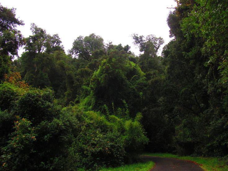 Monumento Natural Cerro Ñielol. Temuco, Chile.