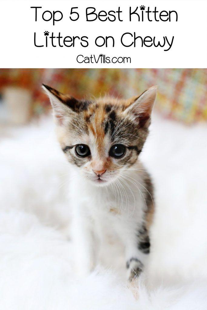 Best Cat Litter For Kittens Top 10 Brands With Reviews Catvills Best Cat Litter Cool Cats Paper Cat Litter