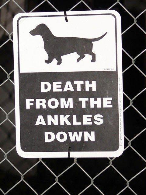 Funny Dachshund Dog Warning Sign