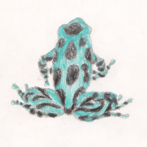 "Dart frog sketch, making of ""Ciacio in Amazonia"" picture book by Sarah Khoury"