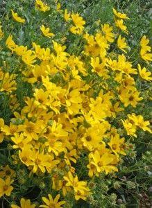 Flower Garden Ideas Colorado 287 best denver colorado gardening images on pinterest   denver