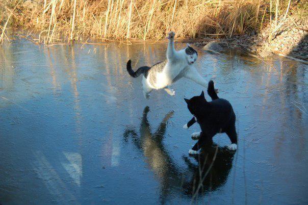 Битва на Чудском озере...