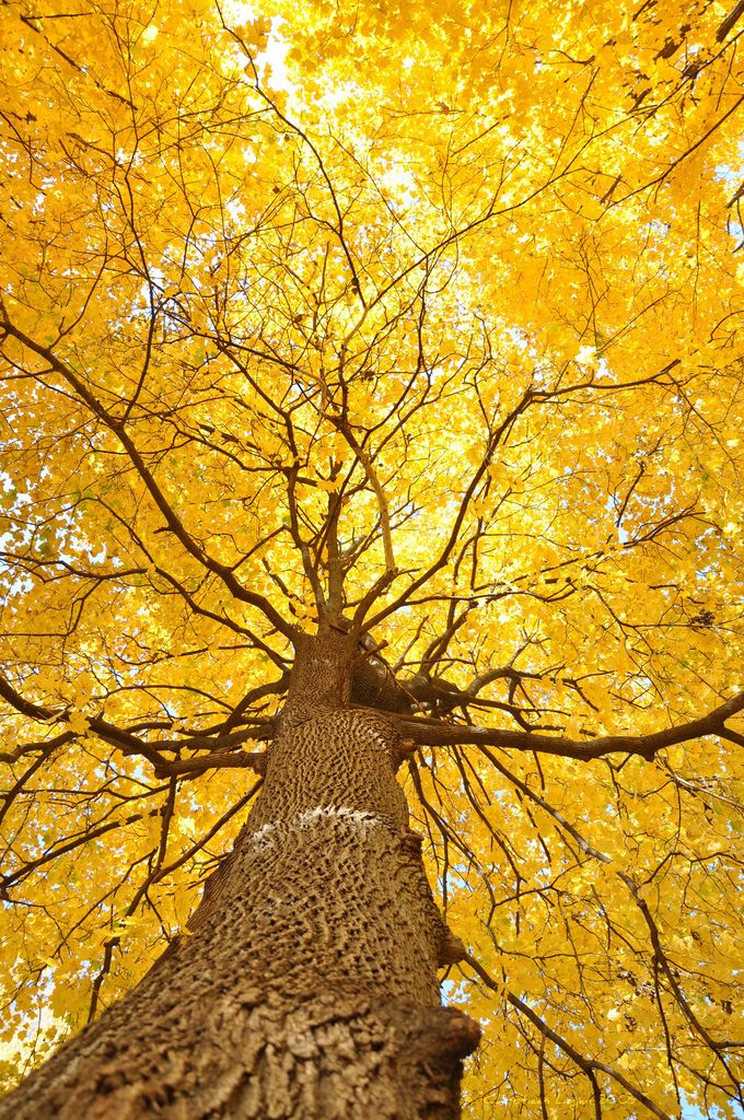What a great shot looking at a tree's infrastructure dressed in brilliant yellow.