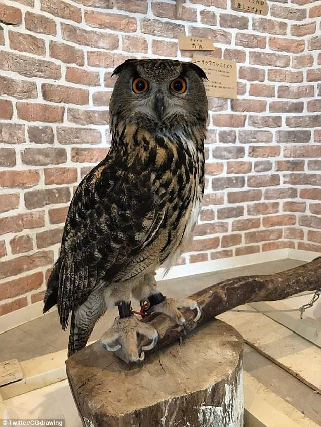 How long is an owl's legs? Pictures have emerged online which show the nocturnal bird sitt...