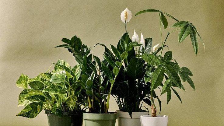 Best Indoor Plants, Exotic Plants, Cool Plants, Air Plants, Succulent Arrangements, Cacti And Succulents, 800 Flowers, Mini Cactus, Great Websites