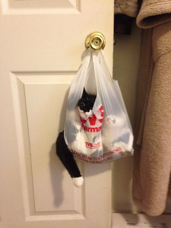 The cat who took on a bag that was too smart for him.   - 24 Cats Who Realize They've Made A Huge Mistake