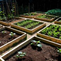 5 Lessons Learned About Raised Bed Gardens: Can be made out of hay bales, good to know and super cheap!