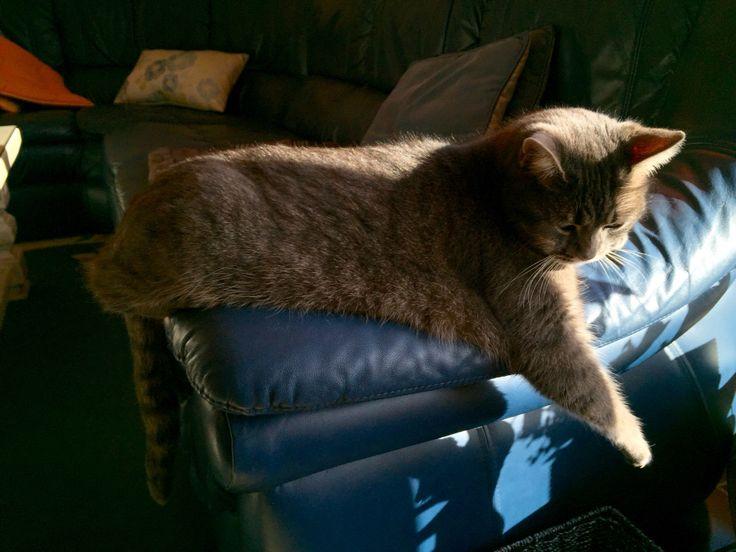Zoé prend un bain de soleil...