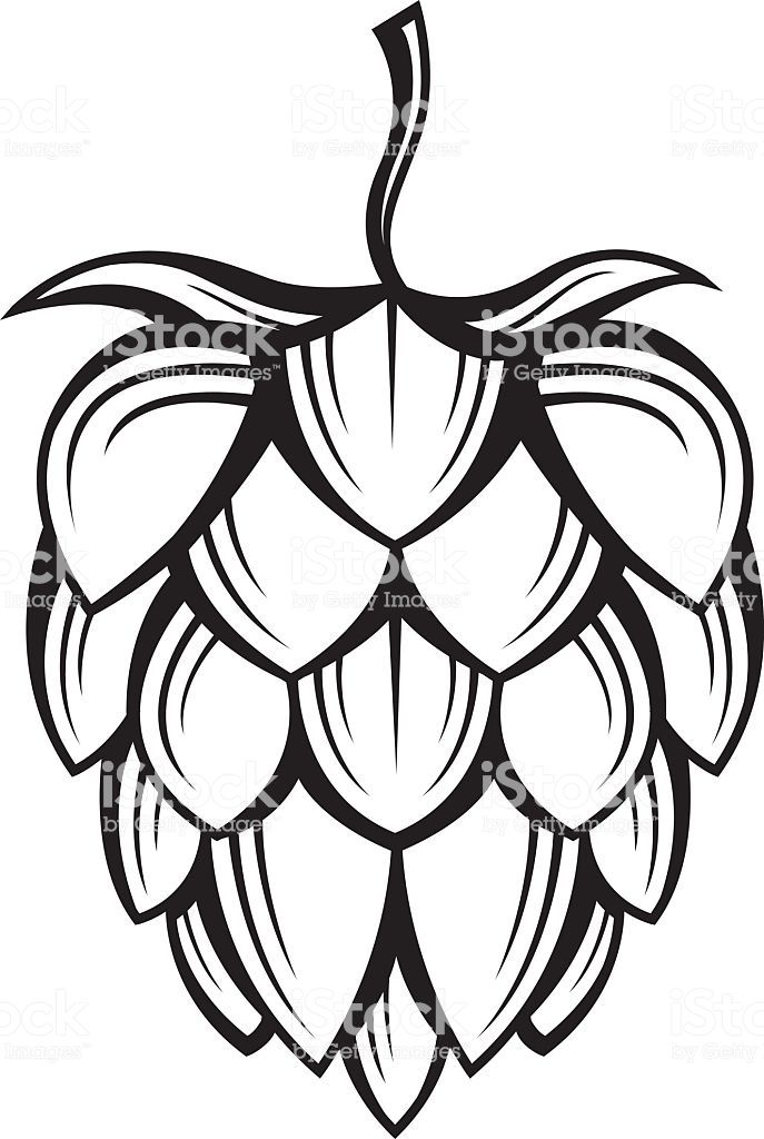 Free Clipart Hops And Barley Real Clipart And Vector
