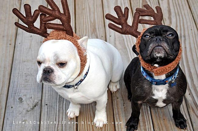 Life At Cobble Hill Farm - dislike of the Christmas card photo