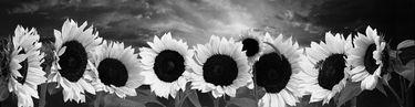 "Saatchi Art Artist Juan Calle; Photography, ""The Rite of Spring"" #art"
