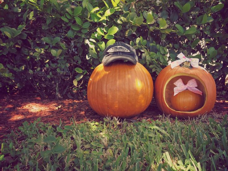 Little Baby Conley's gender reveal!! She's the cutest mini pumpkin around!