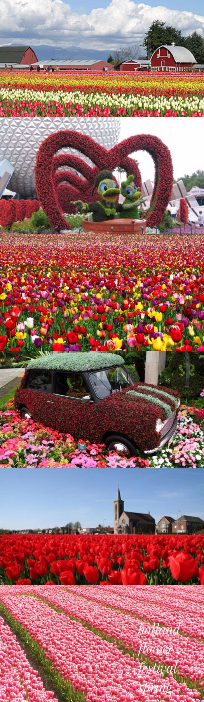 flower festival spring Holland
