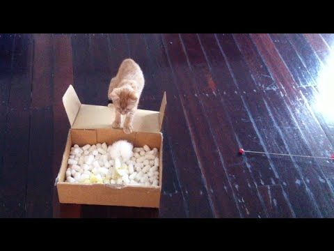 Cute Ginger Kitten Plays with Packaging -  Autumn the Ginger Ninja Episo...
