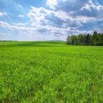 green-field-desktop-wallpaper