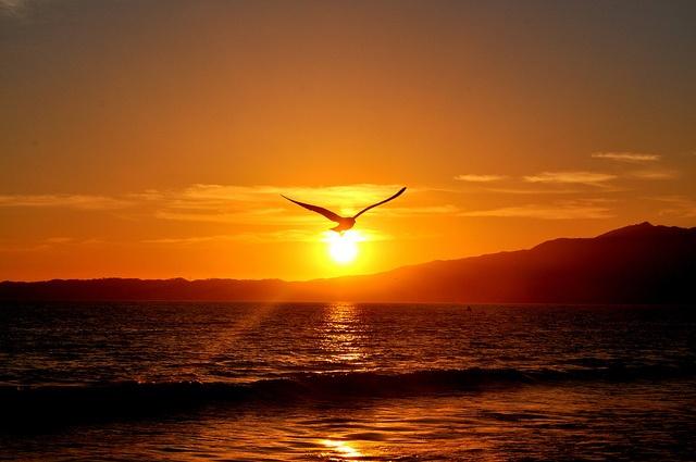Image result for birds flying during dusk