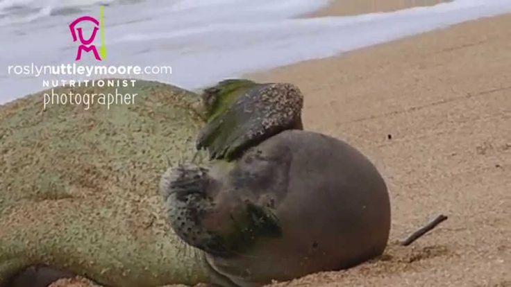 Monking Around ~ Monk Seal Kauai
