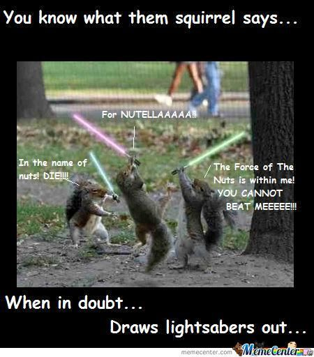 Squirrel Meme Google Search Random And Randomer