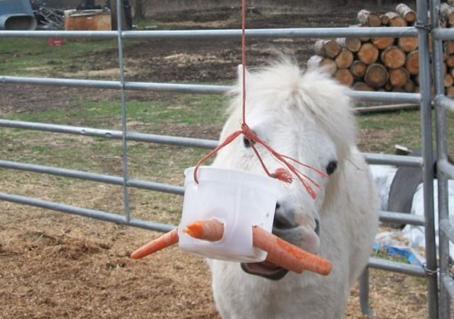 Home Made Horse Toys! And a few other things…  (I'm also wondering what the equivalent toy would be for a dog...)