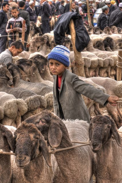 Animal Market Morocco