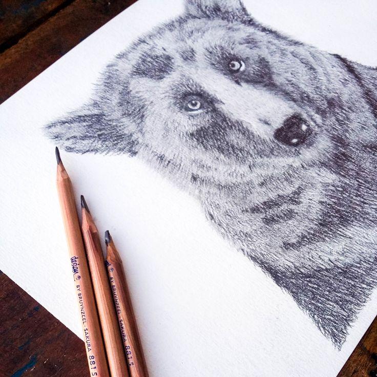 Realistic Bear. @anacbeier - Facebook/anacristibeierilustrações.com