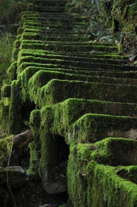 Green Mossy steps