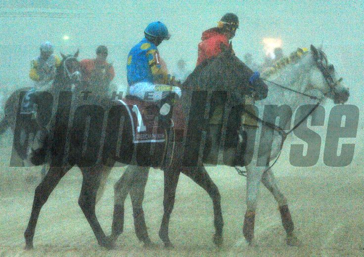 (May 16, 2015) Blinding rain welcomed American Pharoah and the rest of the Preakness field during the post-parade... © 2015 Rick Samuels/The Blood-Horse