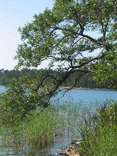 Suomalaiset puut ja pensaat.