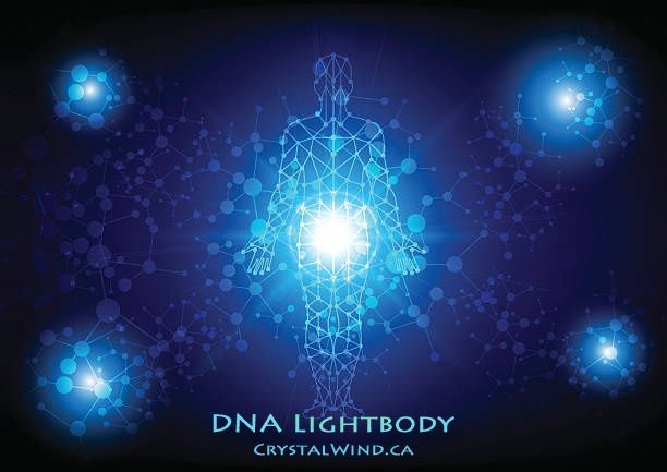 Dna Lightbody Hormonal System Re Writes In Progress Hormones Progress Dna