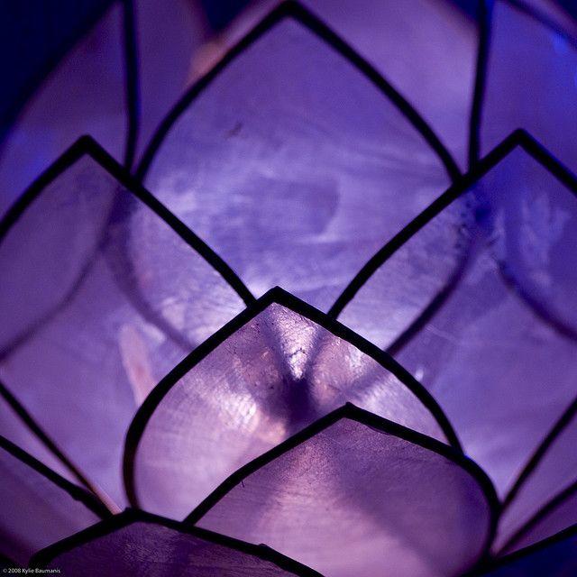 Purple Lotus -  #LovePurple