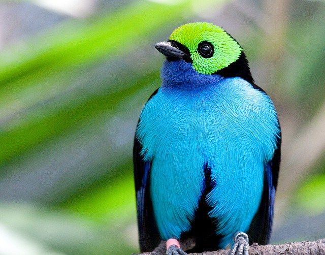 20 Charming Birds of Paradise Pictures