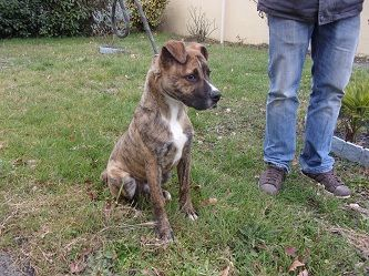 chiens a adopter -5-