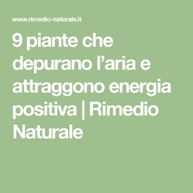 9 piante che depurano l'aria e attraggono energia positiva | Rimedio Naturale