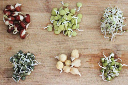 ~How to Grow Bean Sprouts in a Jar~    Clockwise from upper left corner: adzuki, green lentil, alfalfa, French green lentil, chickpea, mung beans