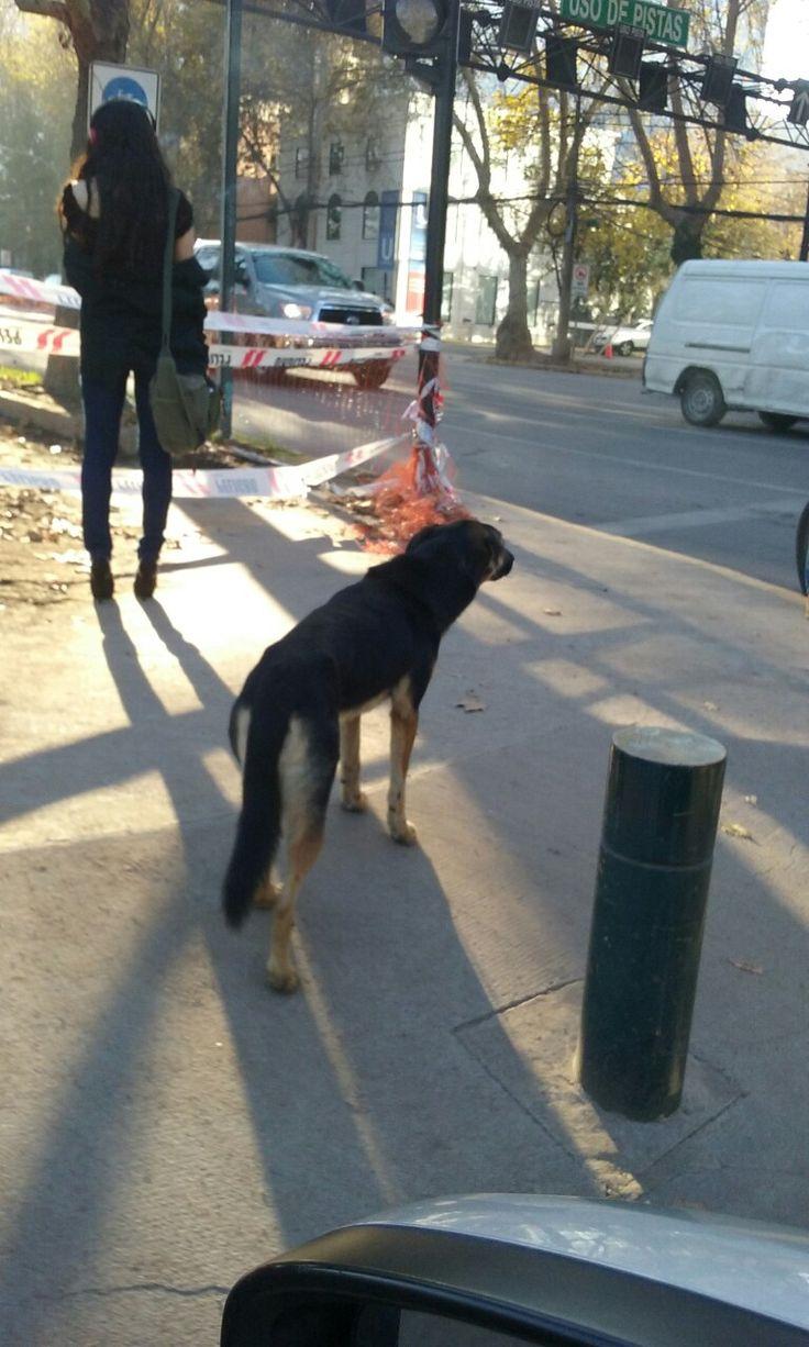 Espera cruzar la calle