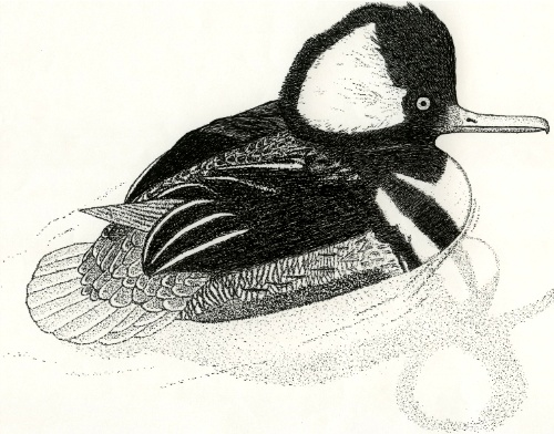 1000 Images About Pen amp Ink Drawings On Pinterest Great