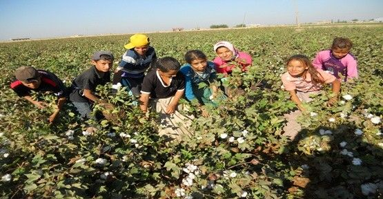 tarlada çalışan çocuklar - Google'da Ara
