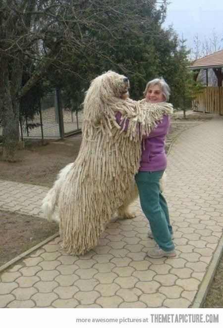 5 Biggest dogs you have ever seen The Pet's Planet